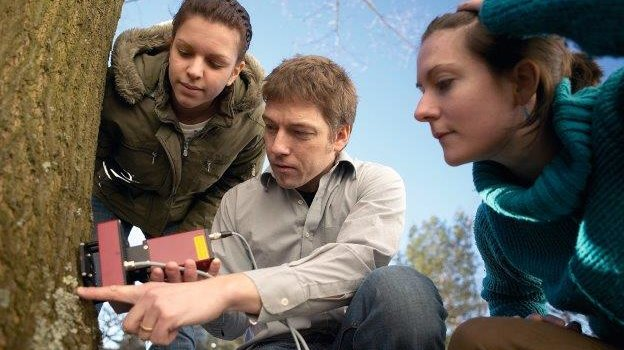 Three researchers working on the bark of a tree with a measuring instrument.